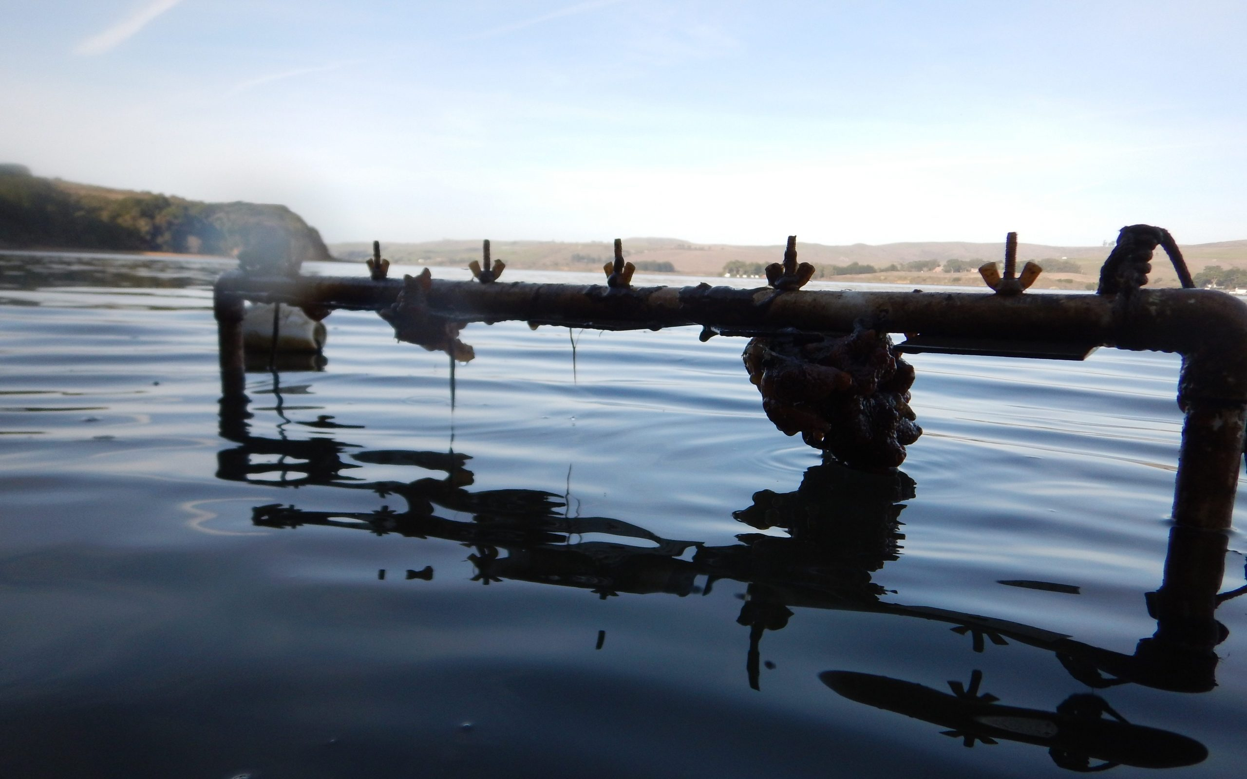 A PVC rack with settlement plates used to collect fouling species in Tomales Bay, California.