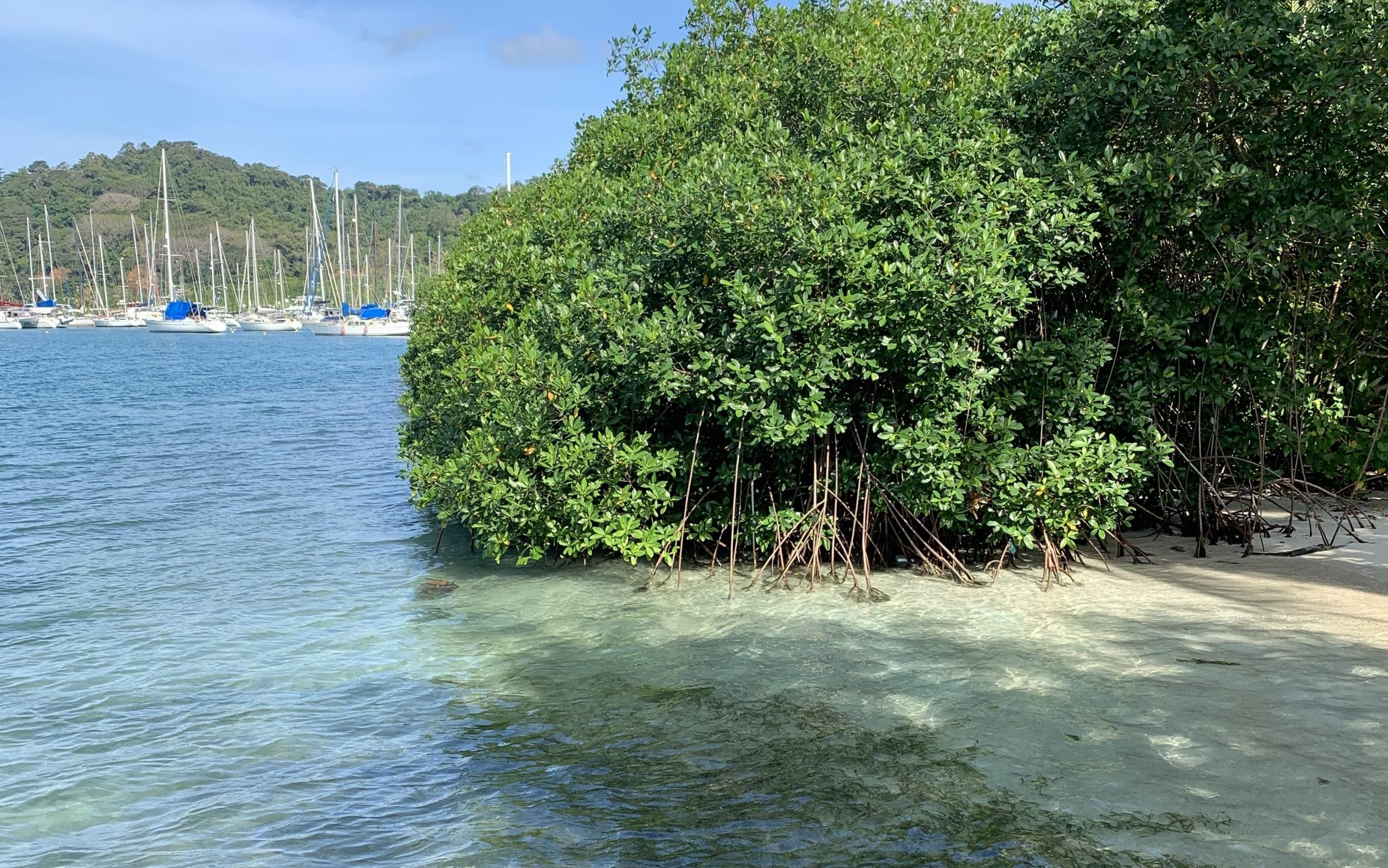 Mangrove and seagrass habitats in Puerto Lindo, Panama with the Linton Bay Marina in the distance.